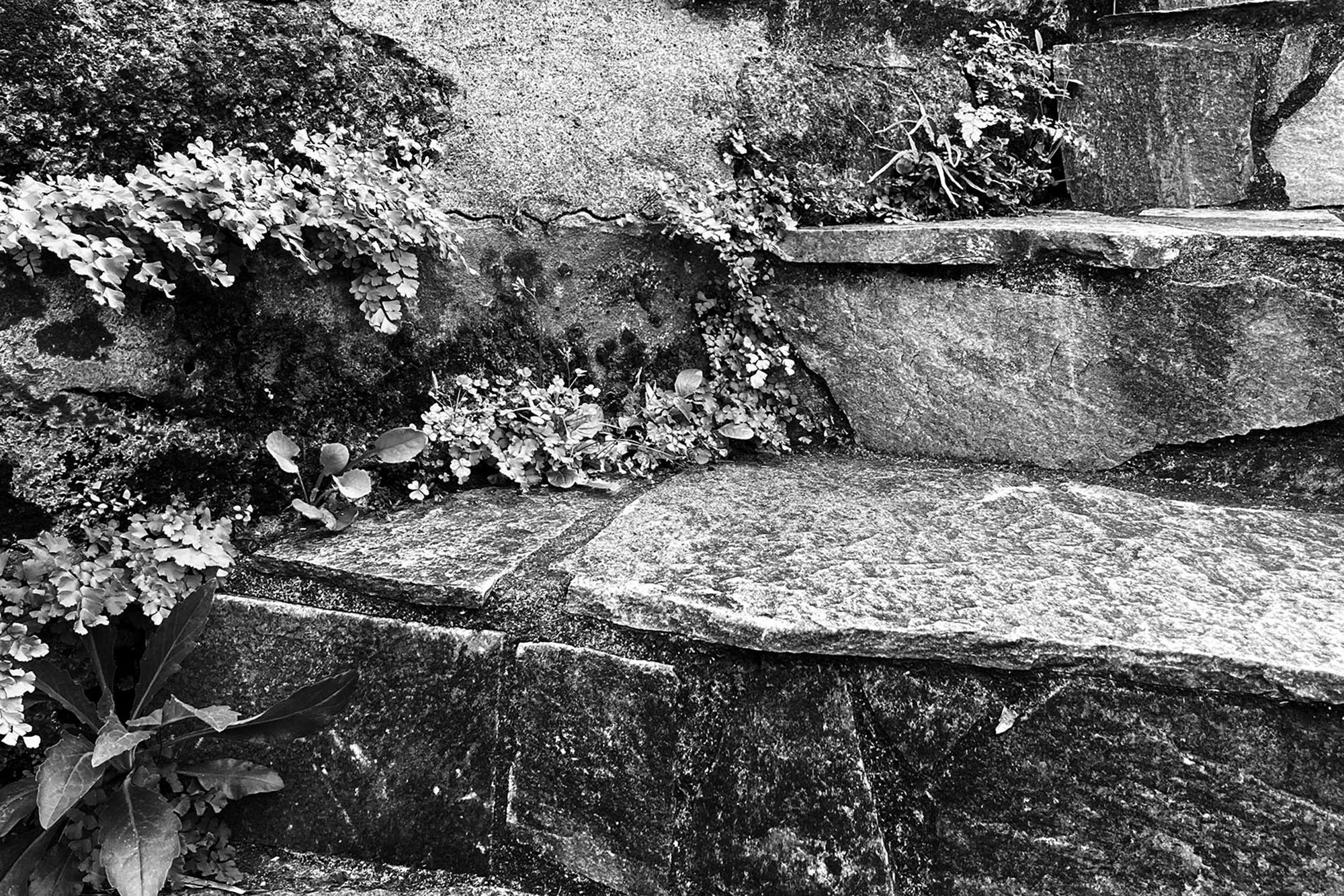 崖と階段|現代美術展・展覧会